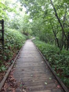 雨上がりの木道を進む