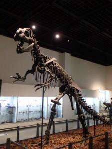 恐竜のお勉強