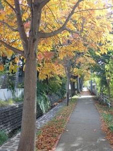真駒内緑町緑道を歩く