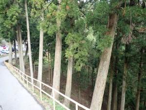 杉林を眺めながら