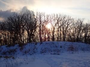 木の間から日の光