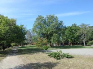 気持ち良く公園を走る