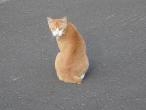 絵鞆の猫が私を見て 諦めなさいと