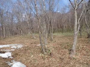 雪が消えかかる木立