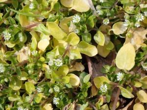 白い可愛い花