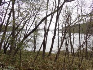 林間からポロト湖