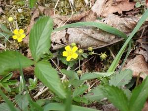 可愛い黄色い花
