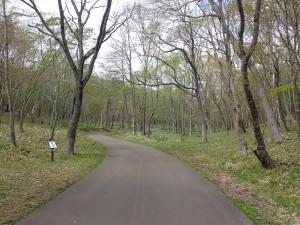 公園の道を進む