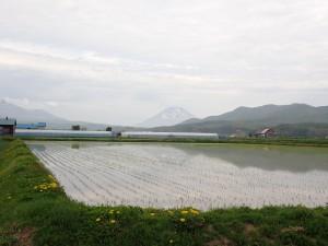 きれいな山と水田