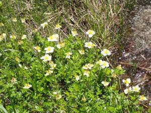 花がうれしい湿原