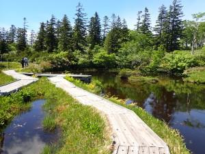 高さの異なる池塘