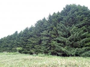 これが休養林