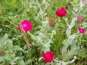 名の知らぬ花