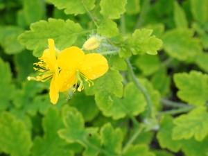 黄色い可愛い花