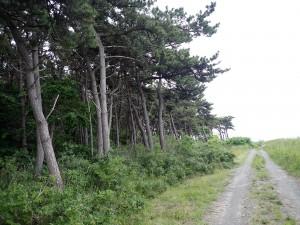 松林の横を走る