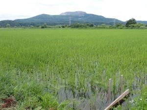 水田と有珠山