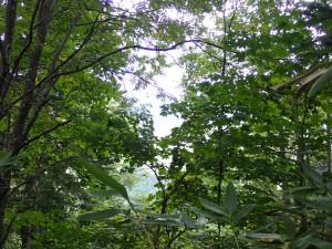 跡から登山者が一人 登ってきてすぐ降りて行った