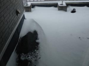 冷たそうな雪の風紋