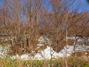 雪解けの雑木林
