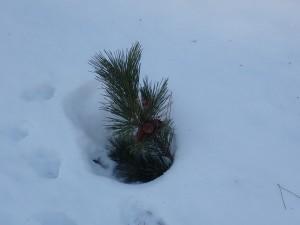 雪も融ける