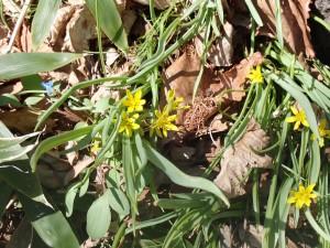 小さく黄色い花