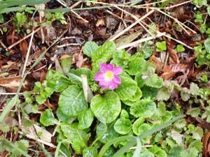 名の知らぬピンクの花