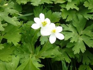清楚な白い花