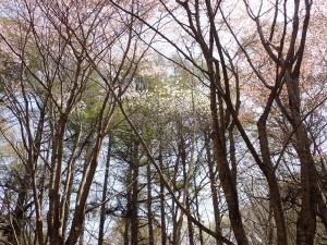 高い木の上に咲く