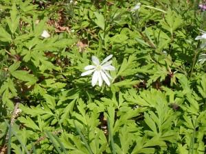 こちらも白い花
