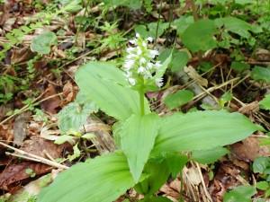 名の知らぬ白い花