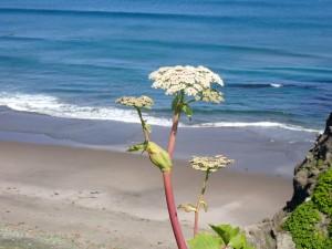 海と白い花