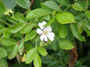 いい形の花