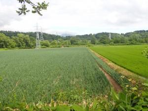 きれいな畑